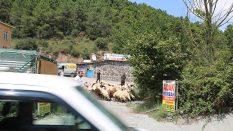 Kadıköy Adak Kurban Satış Yeri