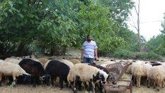 Kadıköy Bostancı Adak Kurban Satış Yeri