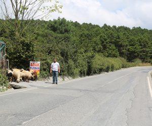 Kadıköy Erenköy Adak Kurban Satış Yeri