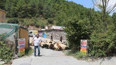 Kadıköy Fikirtepe Adak Kurban Satış Yeri
