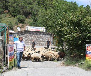 Kadıköy Hasanpaşa Adak Kurban Satış Yeri