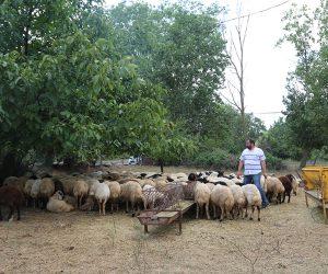 Kadıköy Merkez Adak Kurban Satış Yeri