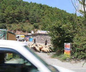 Kadıköy Zühtüpaşa Adak Kurban Satış Yeri