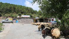 Kadıköy Koşuyolu Adak Kurban Satış Yeri