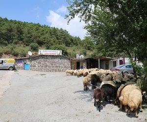 Kadıköy Dumlupınar Adak Kurban Satış Yeri