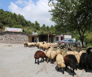 Maltepe Küçükyalı Adak Kurban Satış Yeri