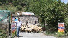 Tuzla Anadolu Adak Kurban Satış Yeri